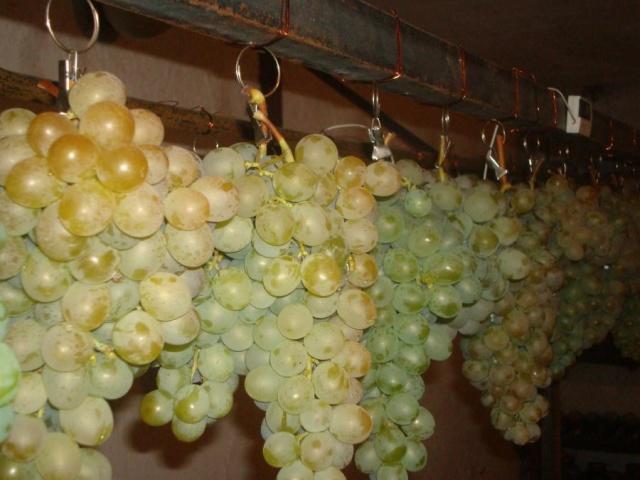 Какие сорта винограда можно выращивать в теплице?