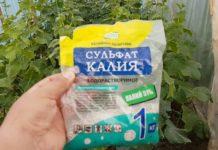 удобрения для огурцов в теплице